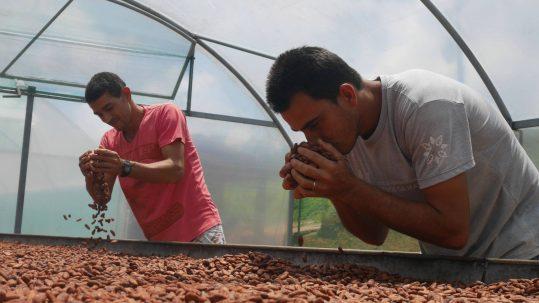 Produtores familiares de cacau certificados pela Ecocert Brasil (Foto: Morgann Jezequel/AF`P)